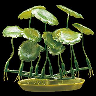 Obrázok pre kategóriu rostliny akvarijní