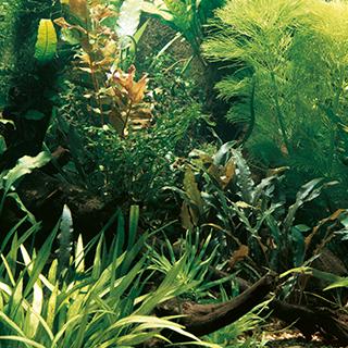 Obrázok pre kategóriu hnojiva na rostliny