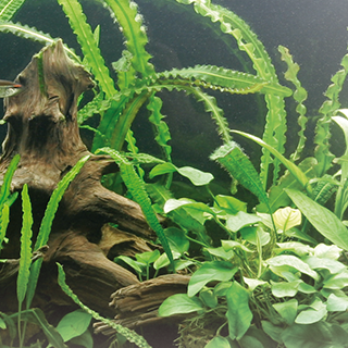 Obrázok pre kategóriu hnojiva na akvarijní rostliny