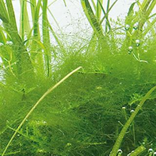 Obrázok pre kategóriu přípravky proti řasám v zahradních jezírkách